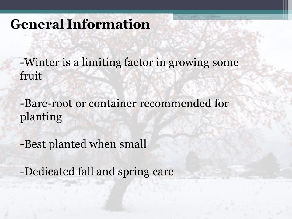 General Information -Winter is a limiting factor in growing some fruit -Bare-root or container recommended for planting -Best planted when small -Dedicated fall and spring care
