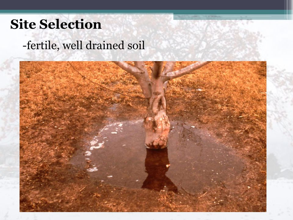 Site Selection -fertile, well drained soil