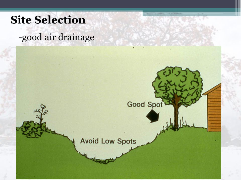 Site Selection -good air drainage