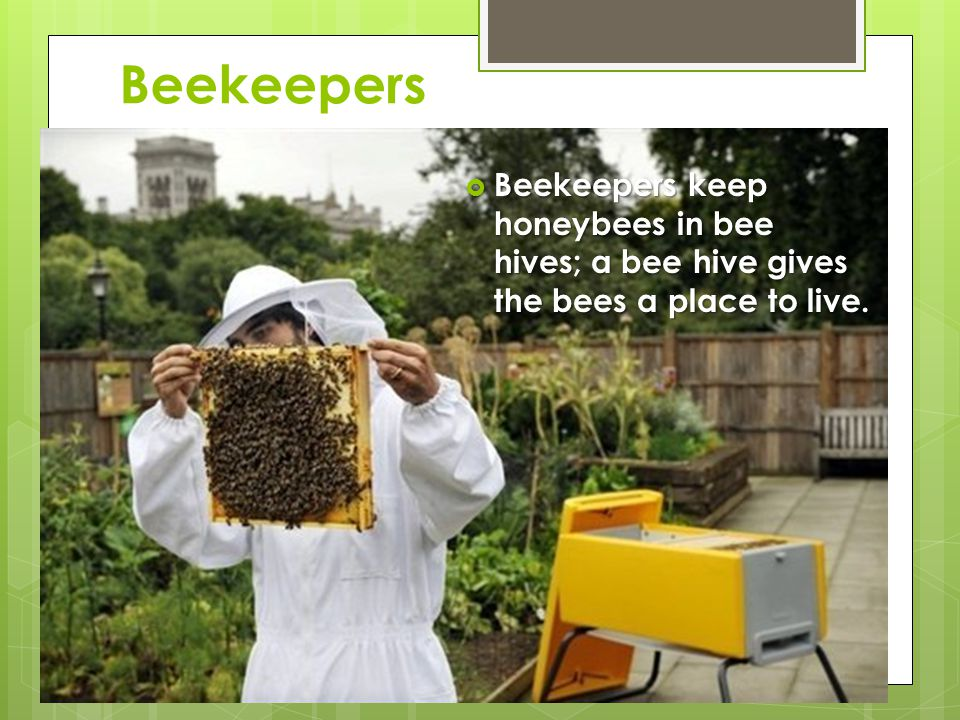 Beekeepers  Beekeepers keep honeybees in bee hives; a bee hive gives the bees a place to live.