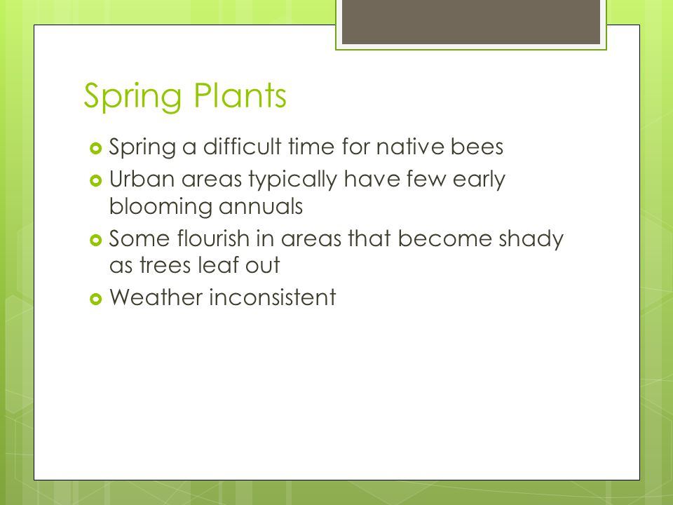 Spring Plants  Spring a difficult time for native bees  Urban areas typically have few early blooming annuals  Some flourish in areas that become shady as trees leaf out  Weather inconsistent