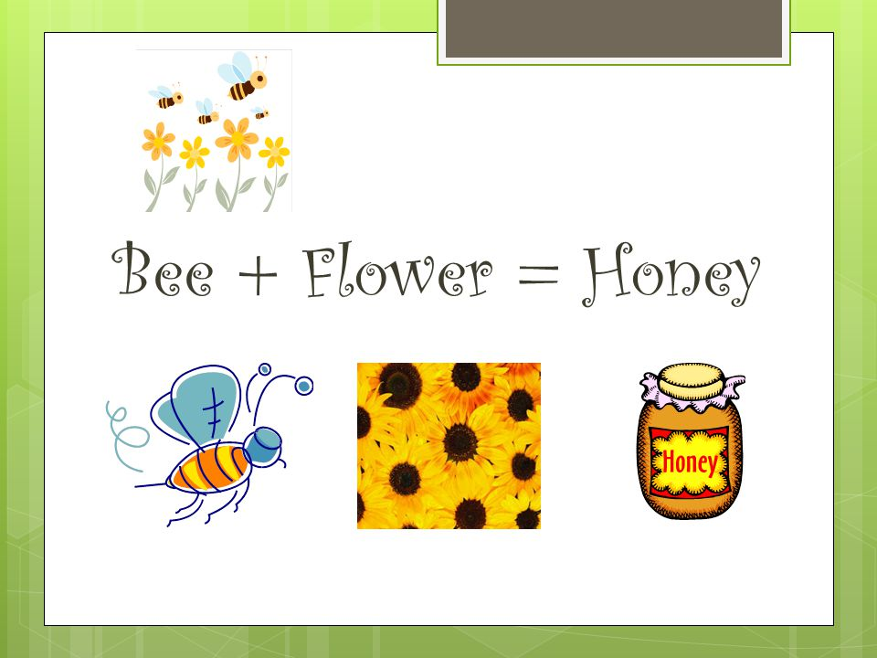 Bee + Flower = Honey