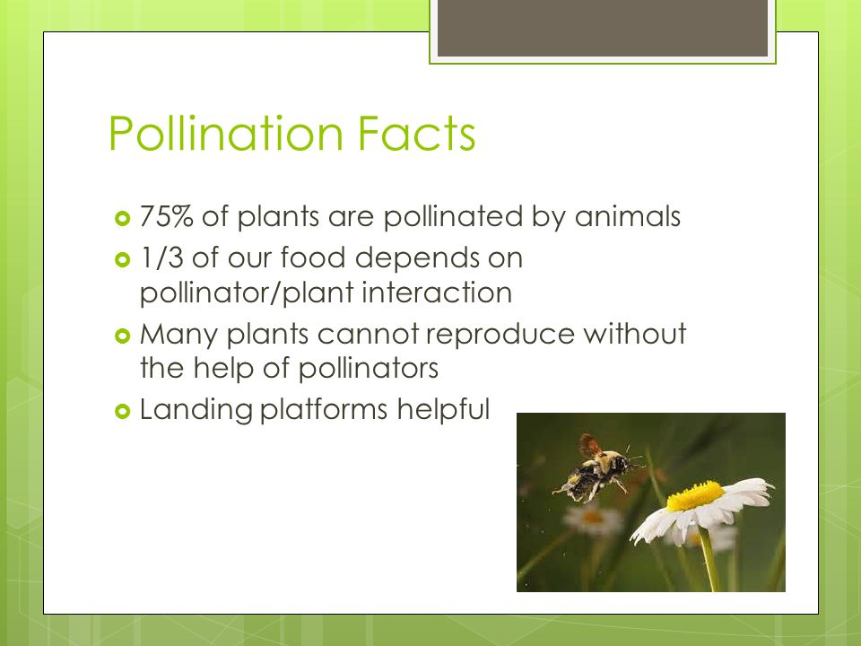Pollination Facts  75% of plants are pollinated by animals  1/3 of our food depends on pollinator/plant interaction  Many plants cannot reproduce without the help of pollinators  Landing platforms helpful