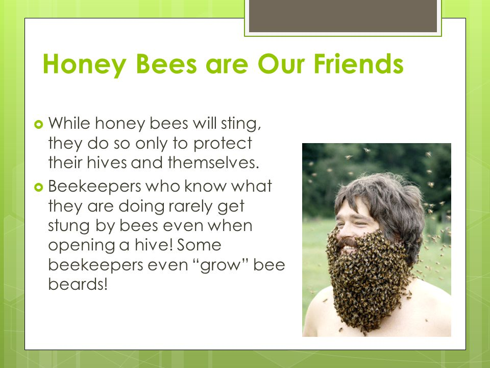 Honey Bees are Our Friends  While honey bees will sting, they do so only to protect their hives and themselves.  Beekeepers who know what they are d