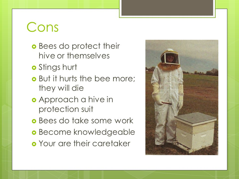Cons  Bees do protect their hive or themselves  Stings hurt  But it hurts the bee more; they will die  Approach a hive in protection suit  Bees do take some work  Become knowledgeable  Your are their caretaker
