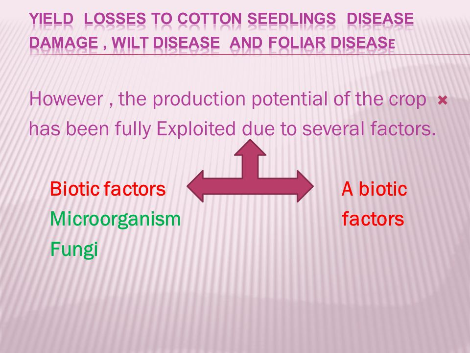  However, the production potential of the crop has been fully Exploited due to several factors.