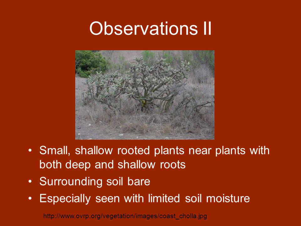 Observations II Small, shallow rooted plants near plants with both deep and shallow roots Surrounding soil bare Especially seen with limited soil moisture http://www.ovrp.org/vegetation/images/coast_cholla.jpg