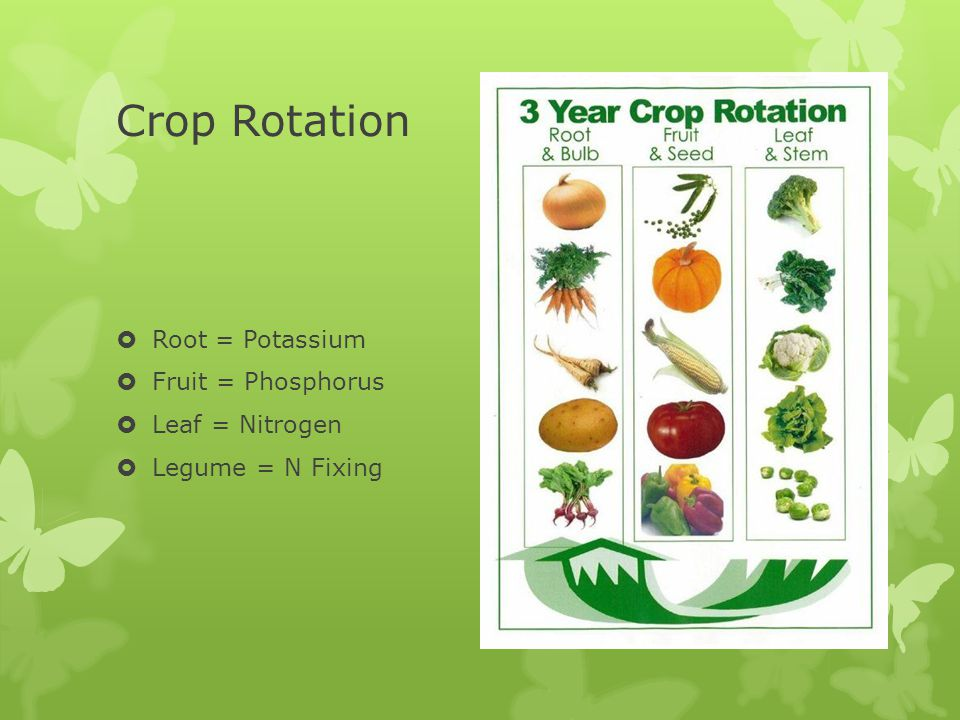 Crop Rotation  Root = Potassium  Fruit = Phosphorus  Leaf = Nitrogen  Legume = N Fixing