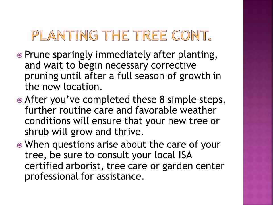  Prune sparingly immediately after planting, and wait to begin necessary corrective pruning until after a full season of growth in the new location.
