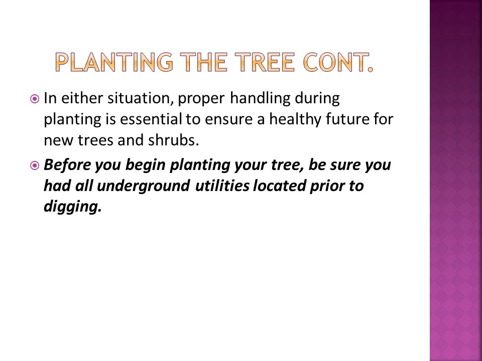  If the tree you are planting is balled, burlapped, or bare rooted, it is important to understand that the tree's root system has been reduced by 90-95% of its original size during transplanting.