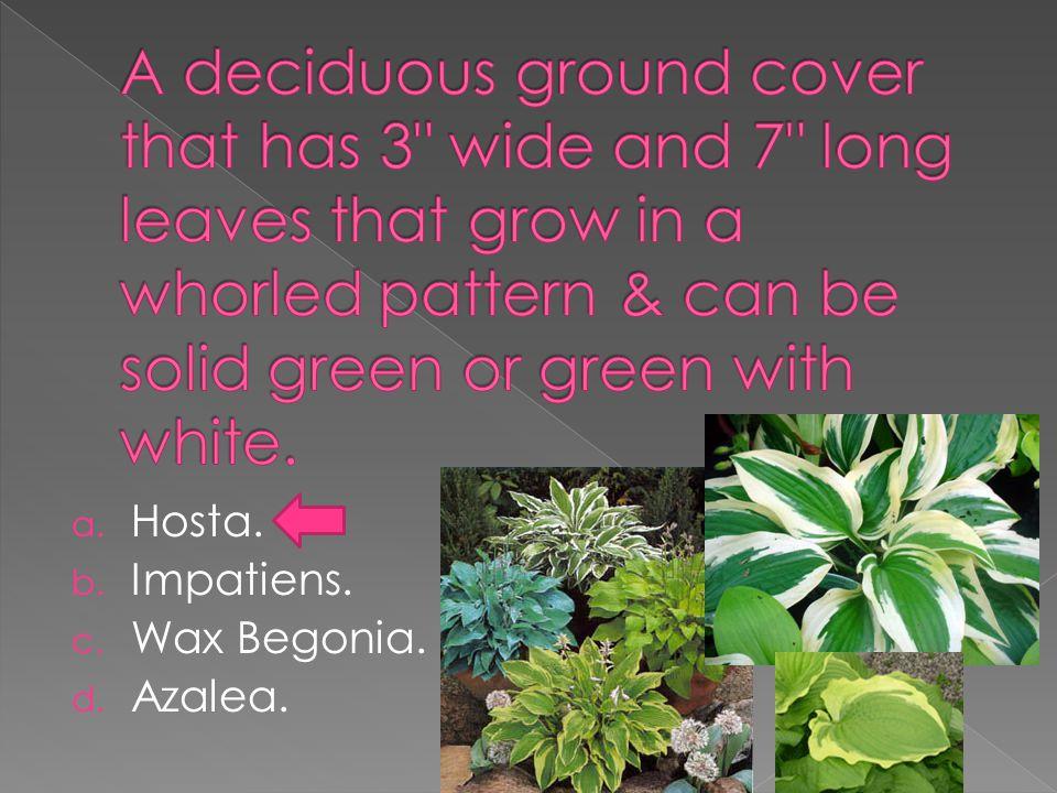 a. Hosta. b. Impatiens. c. Wax Begonia. d. Azalea.