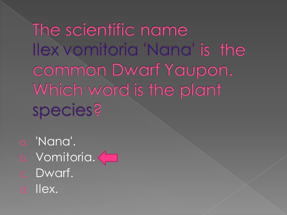 a. Nana . b. Vomitoria. c. Dwarf. d. Ilex.