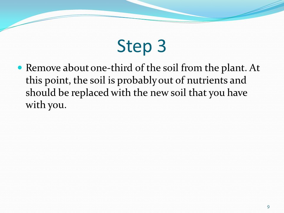 Step 3 Remove about one-third of the soil from the plant.
