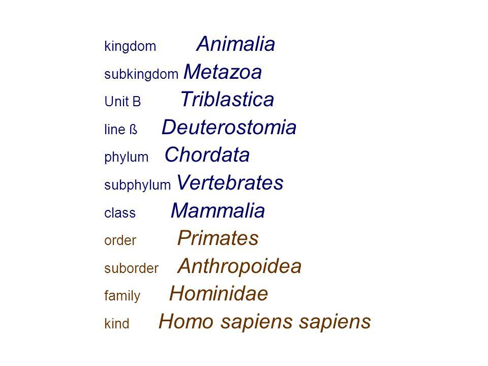 kingdom Animalia subkingdom Metazoa Unit B Triblastica line ß Deuterostomia phylum Chordata subphylum Vertebrates class Mammalia order Primates suborder Anthropoidea family Hominidae kind Homo sapiens sapiens