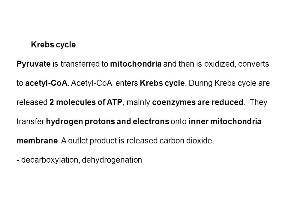 Krebs cycle. Pyruvate is transferred to mitochondria and then is oxidized, converts to acetyl-CoA.