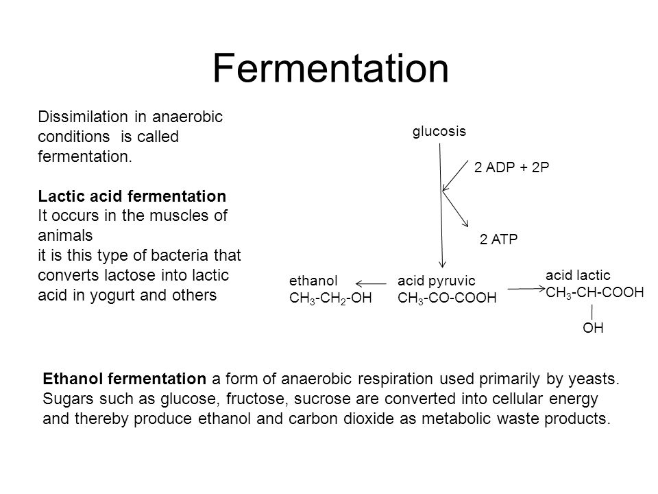 Fermentation Dissimilation in anaerobic conditions is called fermentation.