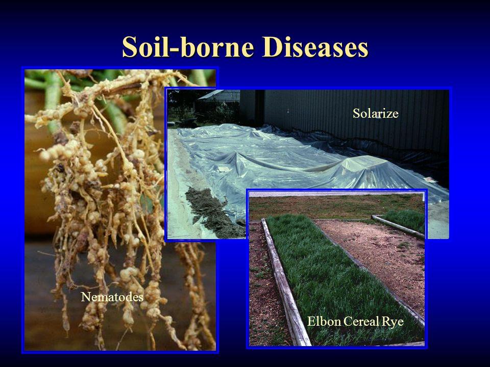 Soil-borne Diseases Nematodes Solarize Elbon Cereal Rye