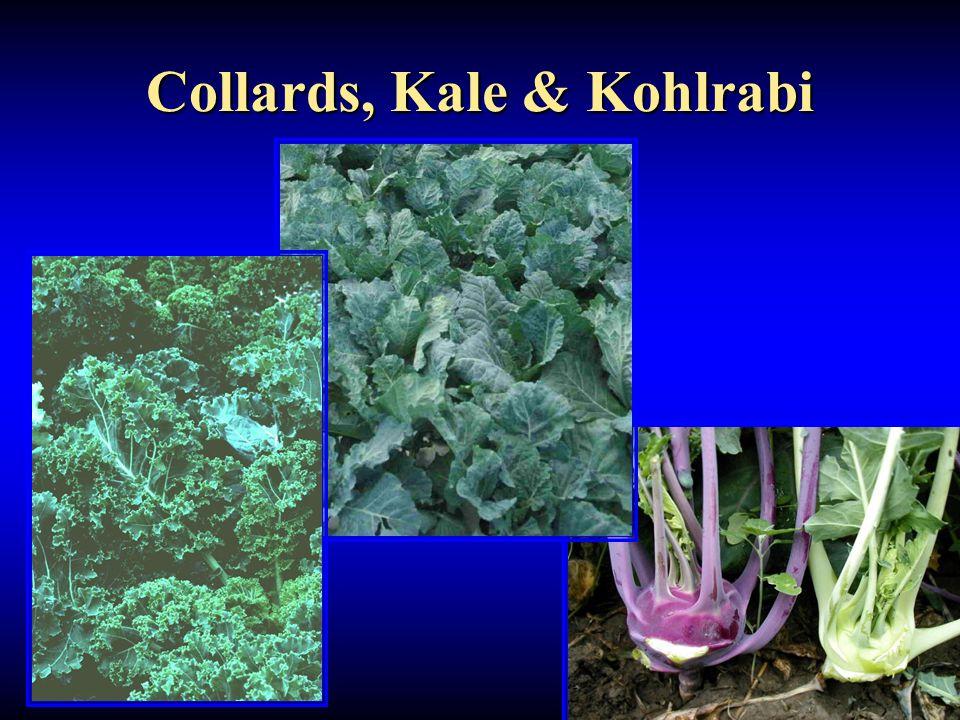 Collards, Kale & Kohlrabi