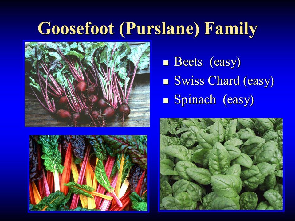 Goosefoot (Purslane) Family Beets (easy) Beets (easy) Swiss Chard (easy) Swiss Chard (easy) Spinach (easy) Spinach (easy)