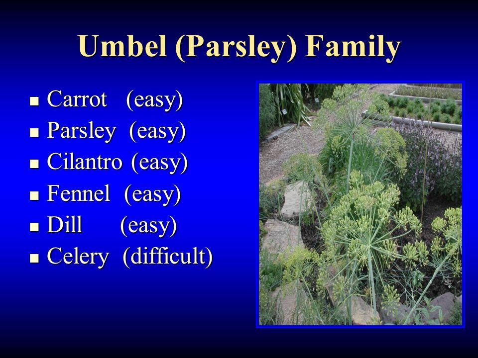 Umbel (Parsley) Family Carrot (easy) Carrot (easy) Parsley (easy) Parsley (easy) Cilantro (easy) Cilantro (easy) Fennel (easy) Fennel (easy) Dill (eas
