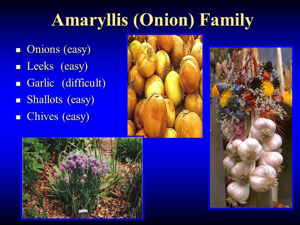 Amaryllis (Onion) Family Onions (easy) Onions (easy) Leeks (easy) Leeks (easy) Garlic (difficult) Garlic (difficult) Shallots (easy) Shallots (easy) Chives (easy) Chives (easy)