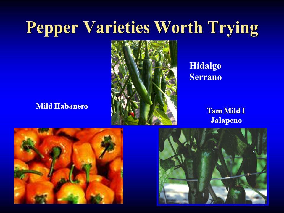 Pepper Varieties Worth Trying Senorita Jalapeno Tam Mild I Jalapeno Mild Habanero Hidalgo Serrano