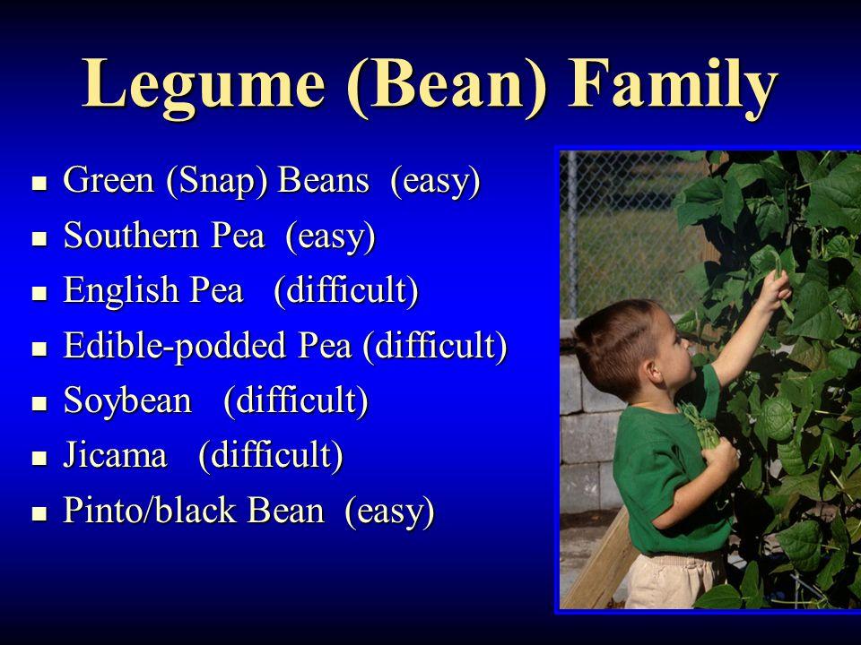 Legume (Bean) Family Green (Snap) Beans (easy) Green (Snap) Beans (easy) Southern Pea (easy) Southern Pea (easy) English Pea (difficult) English Pea (difficult) Edible-podded Pea (difficult) Edible-podded Pea (difficult) Soybean (difficult) Soybean (difficult) Jicama (difficult) Jicama (difficult) Pinto/black Bean (easy) Pinto/black Bean (easy)
