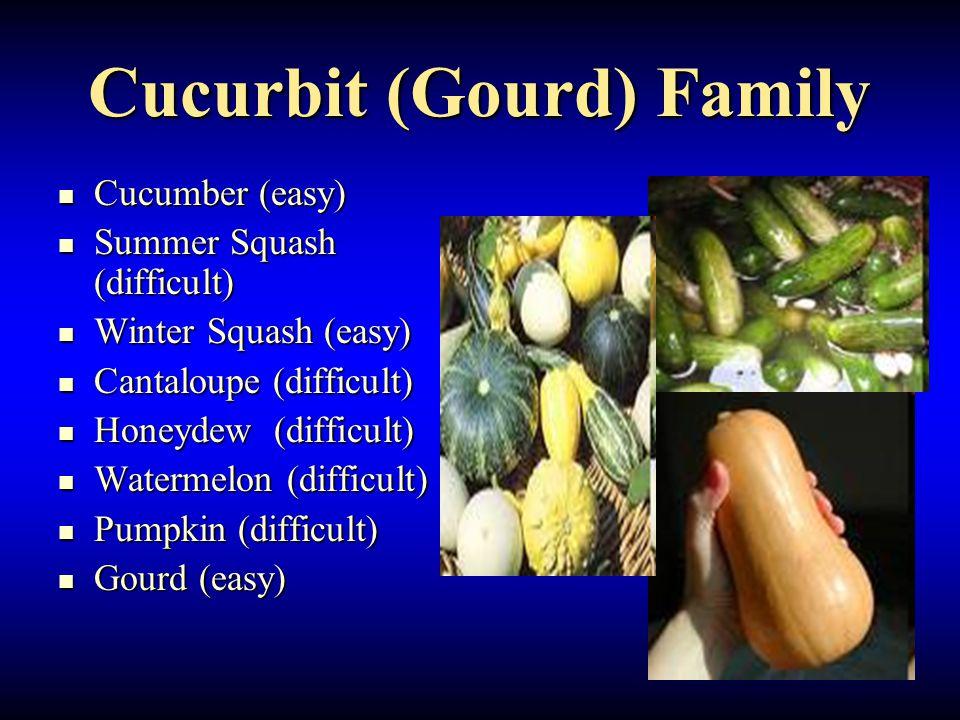 Cucurbit (Gourd) Family Cucumber (easy) Cucumber (easy) Summer Squash (difficult) Summer Squash (difficult) Winter Squash (easy) Winter Squash (easy) Cantaloupe (difficult) Cantaloupe (difficult) Honeydew (difficult) Honeydew (difficult) Watermelon (difficult) Watermelon (difficult) Pumpkin (difficult) Pumpkin (difficult) Gourd (easy) Gourd (easy)