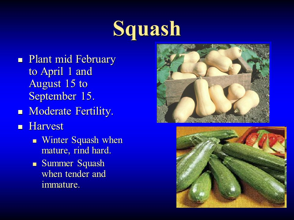 Squash Plant mid February to April 1 and August 15 to September 15. Plant mid February to April 1 and August 15 to September 15. Moderate Fertility. M