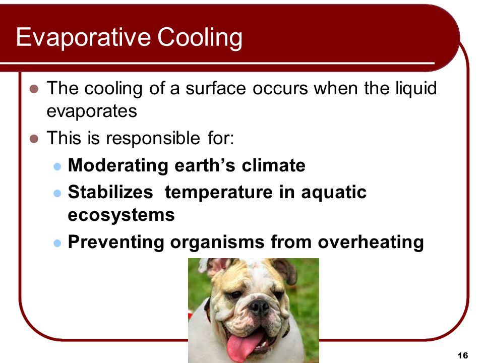 Evaporative Cooling The cooling of a surface occurs when the liquid evaporates This is responsible for: Moderating earth's climate Stabilizes temperature in aquatic ecosystems Preventing organisms from overheating 16