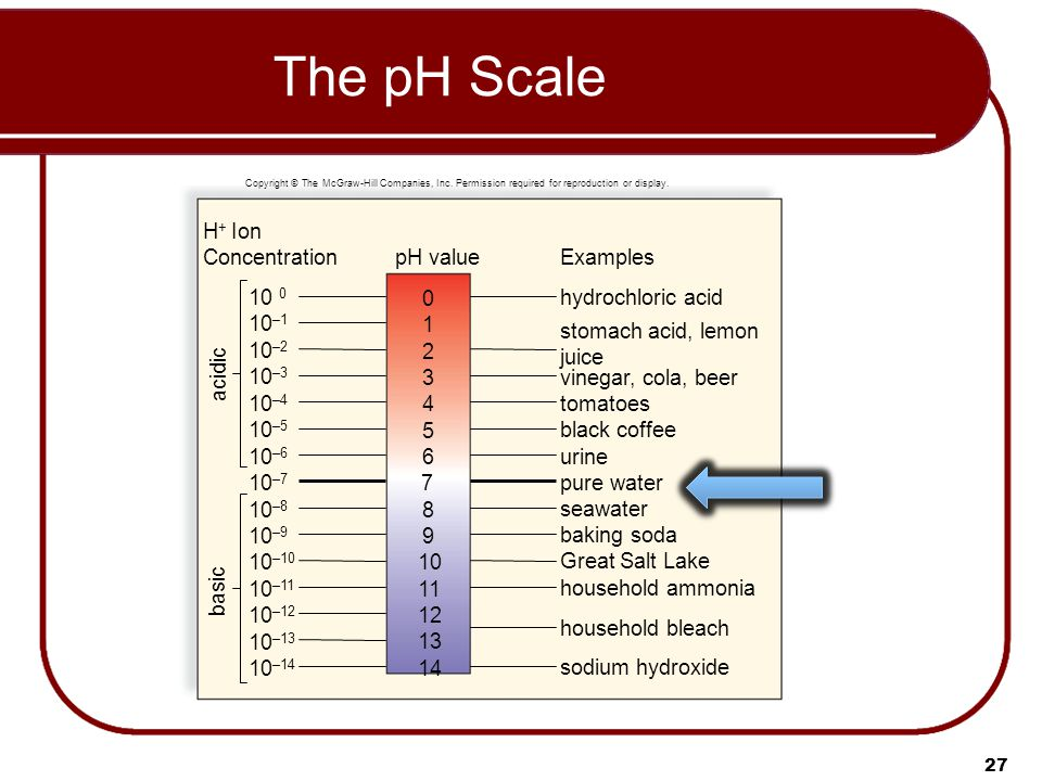 27 The pH Scale pH value 10 –1 10 –2 10 –3 10 –4 10 –5 10 –6 10 –7 10 –8 10 –9 10 –10 10 –11 10 –12 10 –13 10 –14 10 0 Examples hydrochloric acid acidic basic stomach acid, lemon juice vinegar, cola, beer tomatoes black coffee urine pure water seawater baking soda Great Salt Lake household ammonia household bleach sodium hydroxide 1 0 2 3 4 5 6 7 8 9 10 11 12 13 14 H + Ion Concentration Copyright © The McGraw-Hill Companies, Inc.