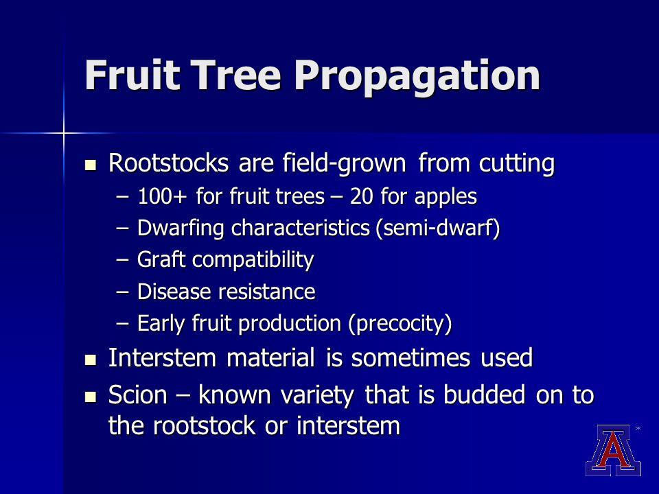 Fruit Tree Propagation Rootstocks are field-grown from cutting Rootstocks are field-grown from cutting –100+ for fruit trees – 20 for apples –Dwarfing characteristics (semi-dwarf) –Graft compatibility –Disease resistance –Early fruit production (precocity) Interstem material is sometimes used Interstem material is sometimes used Scion – known variety that is budded on to the rootstock or interstem Scion – known variety that is budded on to the rootstock or interstem