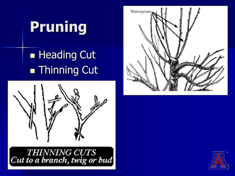Pruning Heading Cut Heading Cut Thinning Cut Thinning Cut