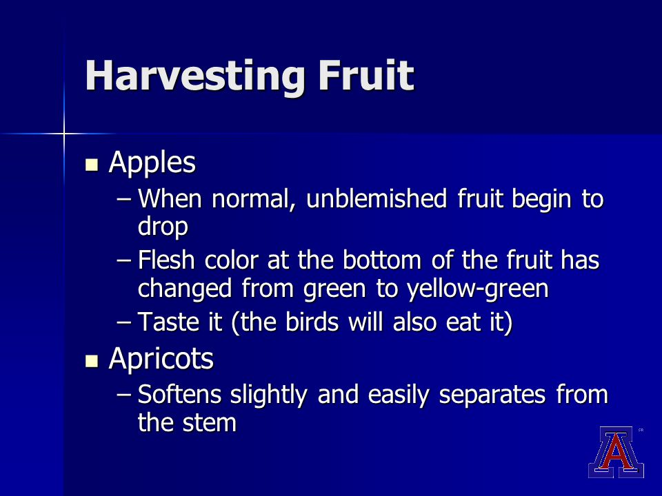 Harvesting Fruit Apples Apples –When normal, unblemished fruit begin to drop –Flesh color at the bottom of the fruit has changed from green to yellow-green –Taste it (the birds will also eat it) Apricots Apricots –Softens slightly and easily separates from the stem