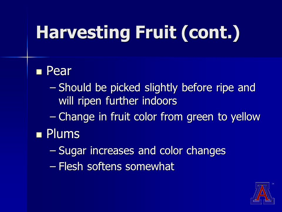 Harvesting Fruit (cont.) Pear Pear –Should be picked slightly before ripe and will ripen further indoors –Change in fruit color from green to yellow Plums Plums –Sugar increases and color changes –Flesh softens somewhat