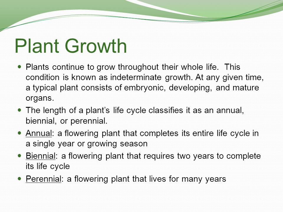 Plant Growth Plants continue to grow throughout their whole life. This condition is known as indeterminate growth. At any given time, a typical plant