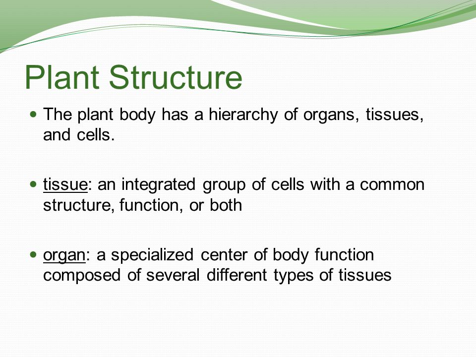 Plant Structure: Organs Plants have three basic organs: roots, shoots, and leaves.