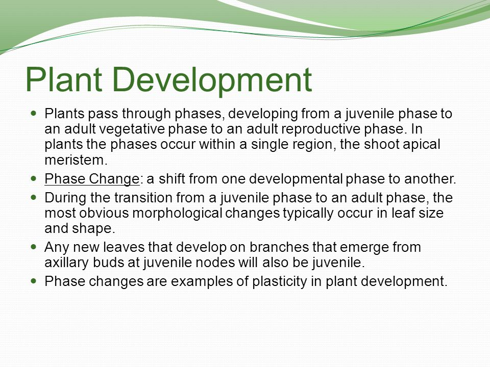 Plant Development Plants pass through phases, developing from a juvenile phase to an adult vegetative phase to an adult reproductive phase. In plants