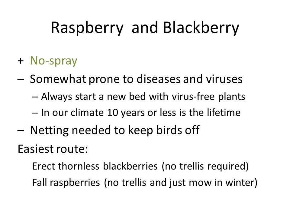 Raspberry and Blackberry + No-spray – Somewhat prone to diseases and viruses – Always start a new bed with virus-free plants – In our climate 10 years