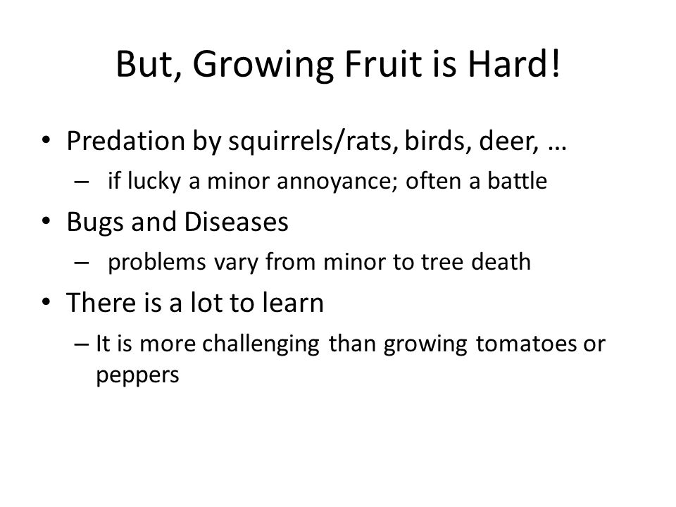 But, Growing Fruit is Hard! Predation by squirrels/rats, birds, deer, … – if lucky a minor annoyance; often a battle Bugs and Diseases – problems vary