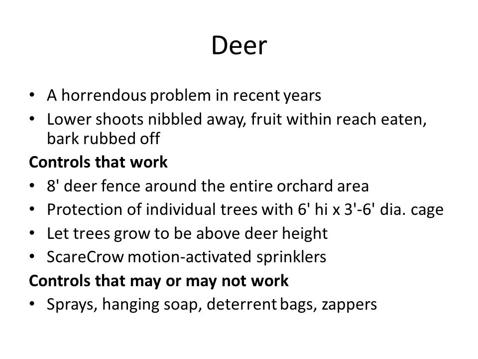 Deer A horrendous problem in recent years Lower shoots nibbled away, fruit within reach eaten, bark rubbed off Controls that work 8' deer fence around