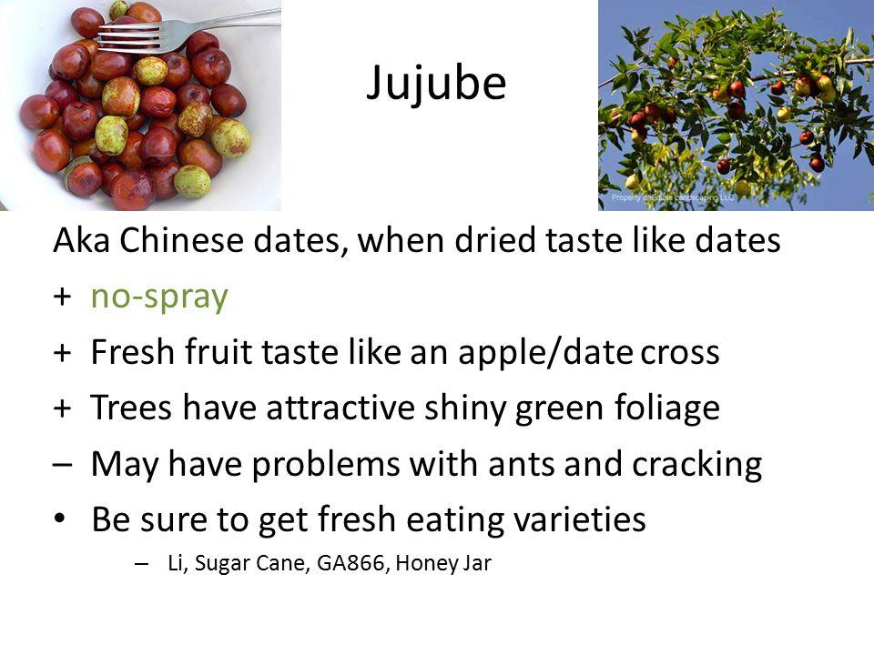 Jujube Aka Chinese dates, when dried taste like dates + no-spray + Fresh fruit taste like an apple/date cross + Trees have attractive shiny green foli
