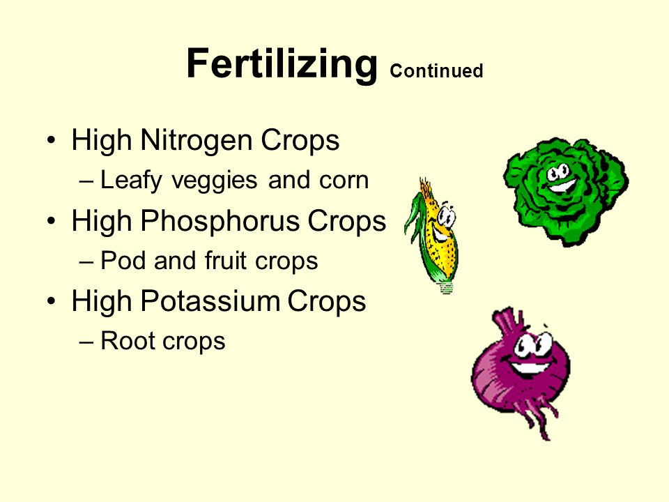 Fertilizing Continued High Nitrogen Crops –Leafy veggies and corn High Phosphorus Crops –Pod and fruit crops High Potassium Crops –Root crops