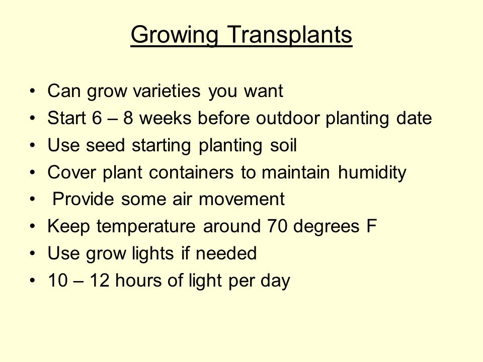 Growing Transplants Can grow varieties you want Start 6 – 8 weeks before outdoor planting date Use seed starting planting soil Cover plant containers to maintain humidity Provide some air movement Keep temperature around 70 degrees F Use grow lights if needed 10 – 12 hours of light per day