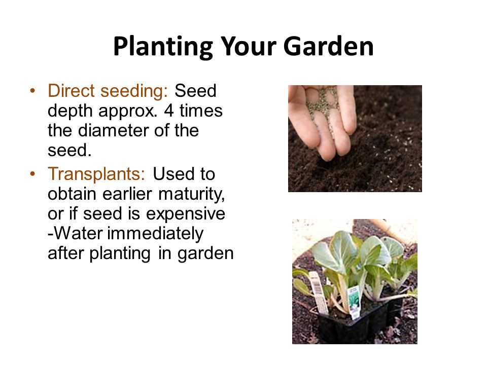 Planting Your Garden Direct seeding: Seed depth approx.