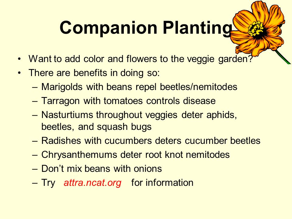 Companion Planting Want to add color and flowers to the veggie garden.
