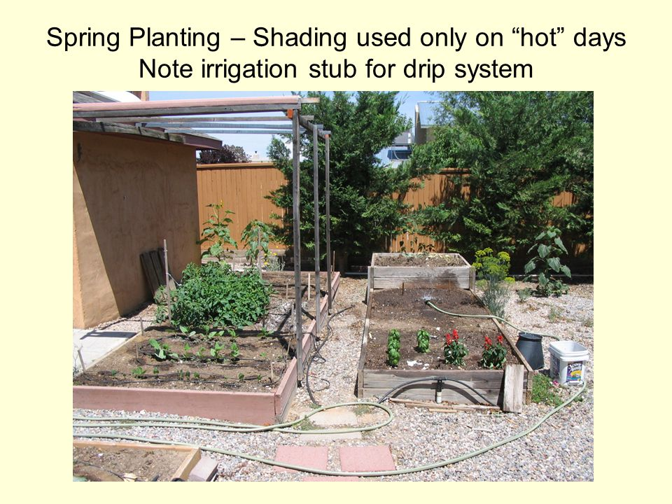 Spring Planting – Shading used only on hot days Note irrigation stub for drip system