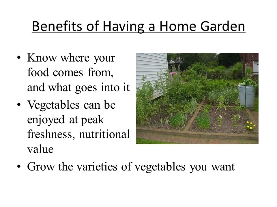 Benefits of Having a Home Garden Know where your food comes from, and what goes into it Vegetables can be enjoyed at peak freshness, nutritional value Grow the varieties of vegetables you want