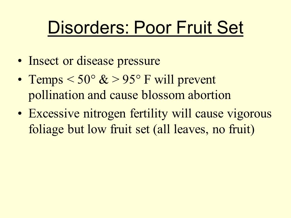 Disorders: Poor Fruit Set Insect or disease pressure Temps 95° F will prevent pollination and cause blossom abortion Excessive nitrogen fertility will cause vigorous foliage but low fruit set (all leaves, no fruit)