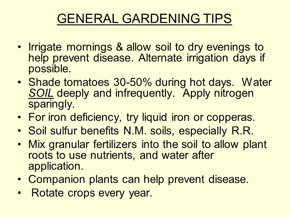 GENERAL GARDENING TIPS Irrigate mornings & allow soil to dry evenings to help prevent disease.
